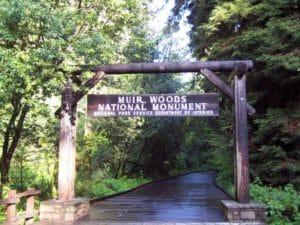 Woods-8-667x500